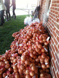 At the Mission of Mercy food distribution before Thanksgiving. That's a lot of onions!
