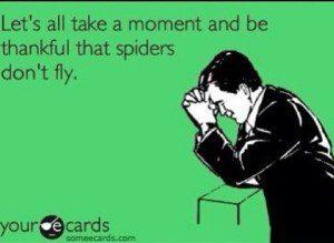 spidersdontfly